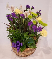 Dish Garden with Fresh Flowers in Handled Basket