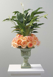 Spathiphyllum Plant in Urn with Rose Wreath